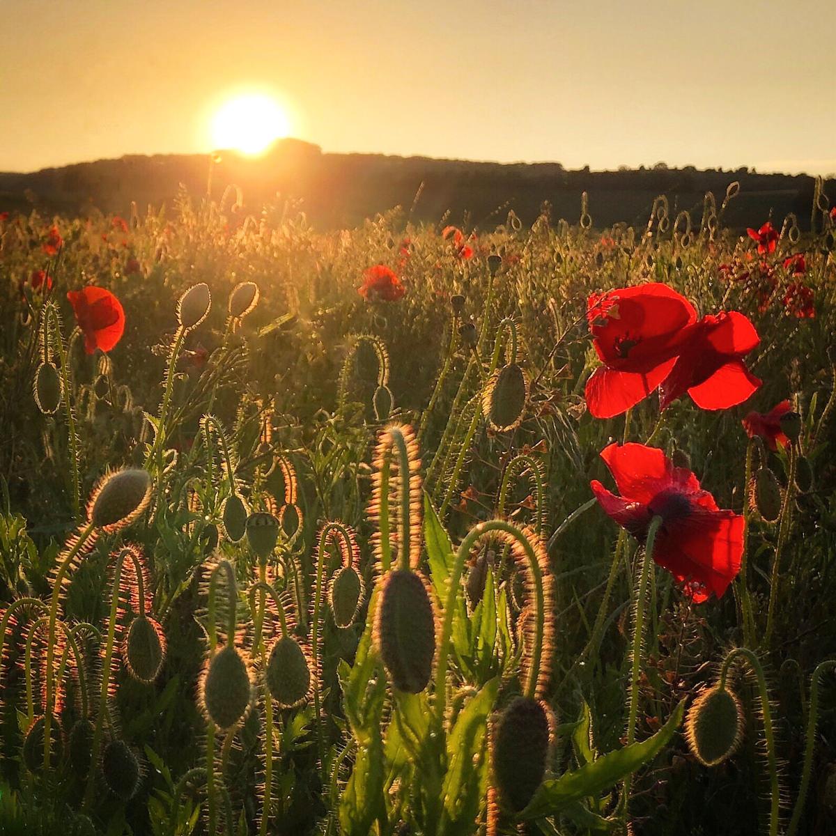 An Evening in a Summer Field