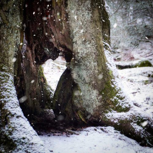 Winter Heart Tree Snow