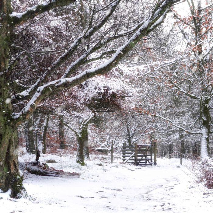 Woodland Snow Gate
